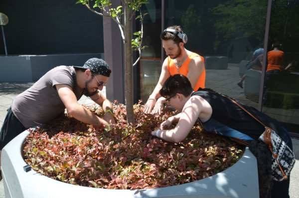 Image: three people search in large plant pot amongst foliage